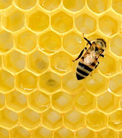 França é primeiro país a banir todos os cinco pesticidas ligados à morte de abelhas