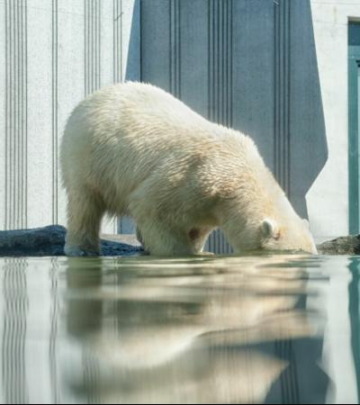 Finalmente, a maioria das pessoas acredita e teme as mudanças climáticas
