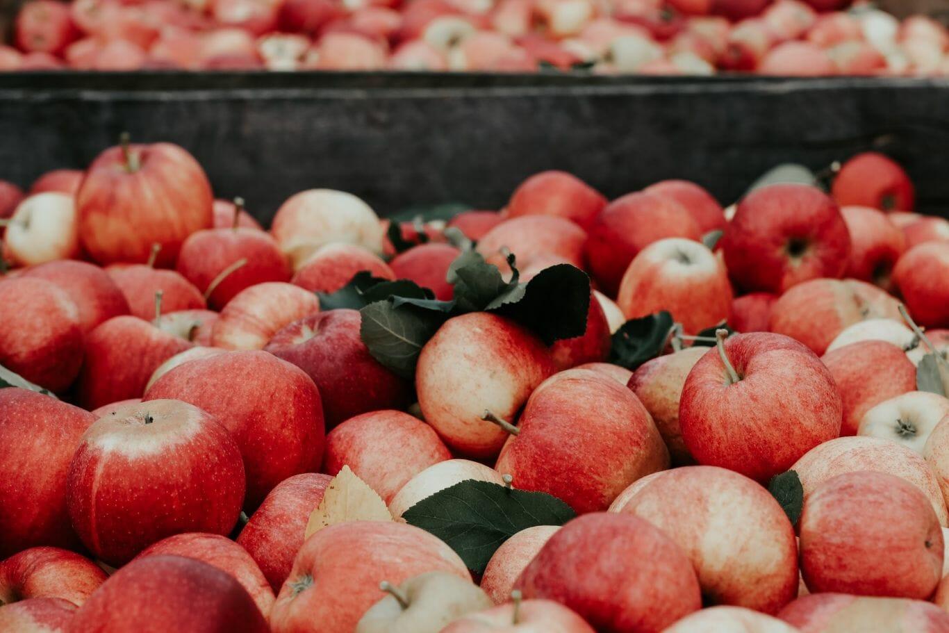 sofá couro maçã 2