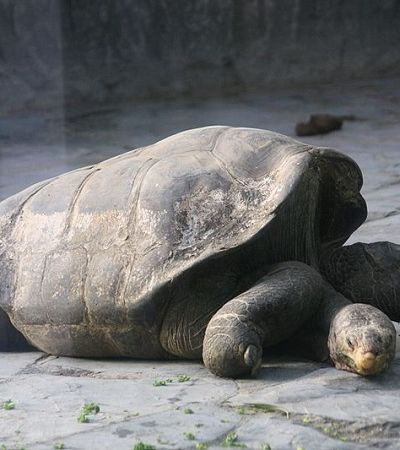Após 100 anos tartarugas voltam a nascer em Galápagos