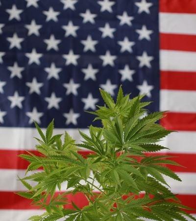 61% dos americanos apoiam legalização nacional da maconha nos EUA