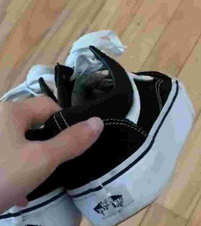 Um tênis Vans cai sempre com os cadarços para cima? Internet faz o teste