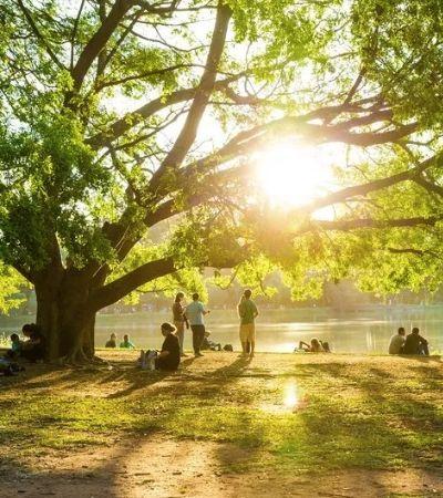Parque do Ibirapuera ganha plantão psicológico aberto ao público