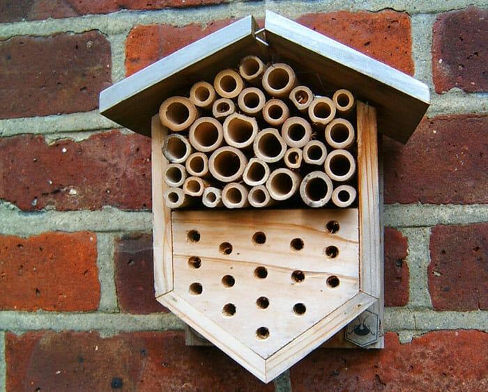 ajudar abelhas sobreviver 5