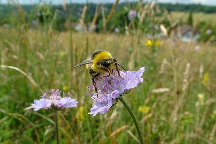 ajudar abelhas sobreviver 6