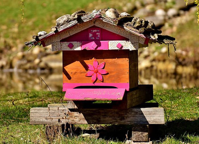 ajudar abelhas sobreviver 9