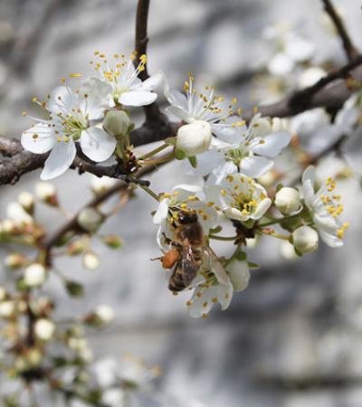 8 coisas que você pode fazer para ajudar as abelhas a sobreviver