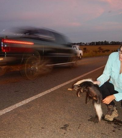 Brasileira ganha prêmio por ações contra atropelamentos de animais