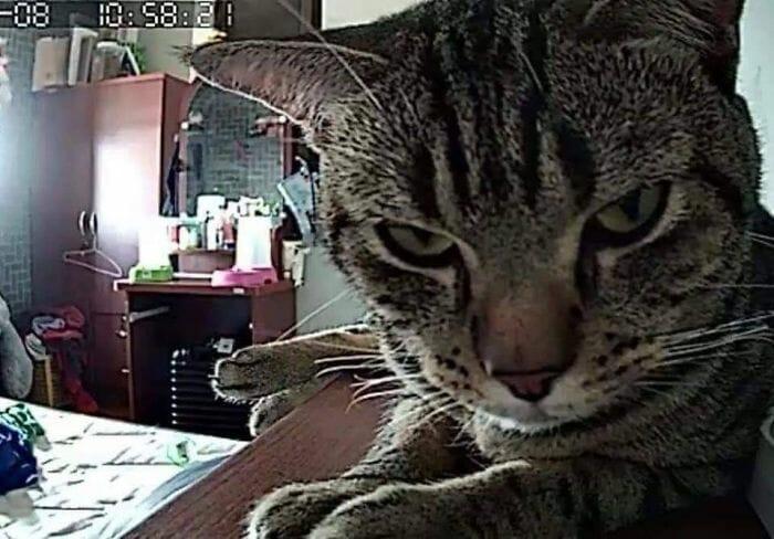 câmera gato noite 11