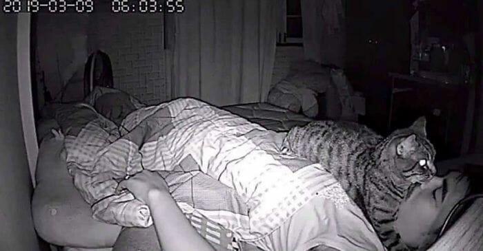 câmera gato noite 3