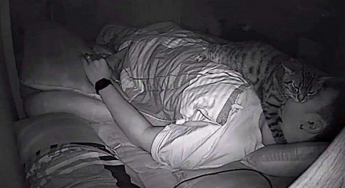 câmera gato noite 4
