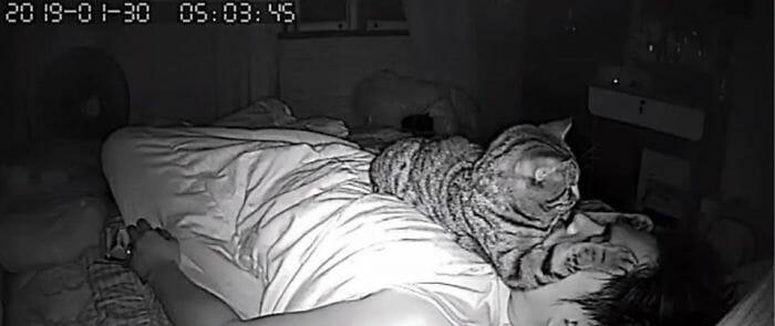 câmera gato noite 5