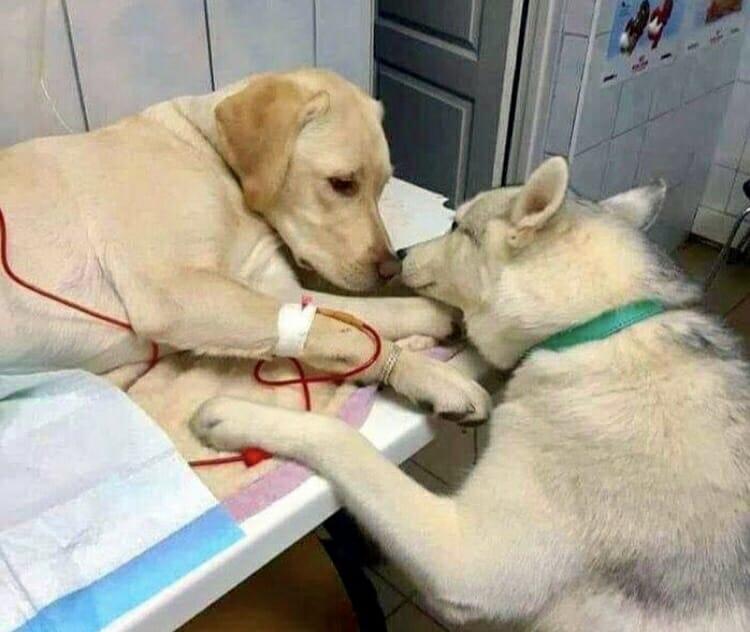 cachorro amigo veterinário 1