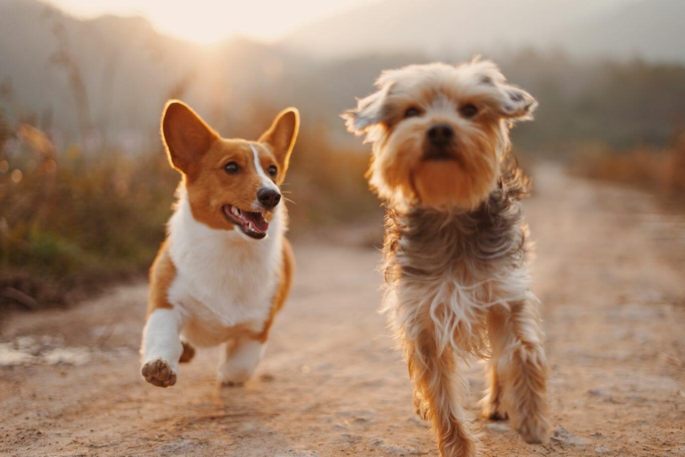 cachorro amigo veterinário 2