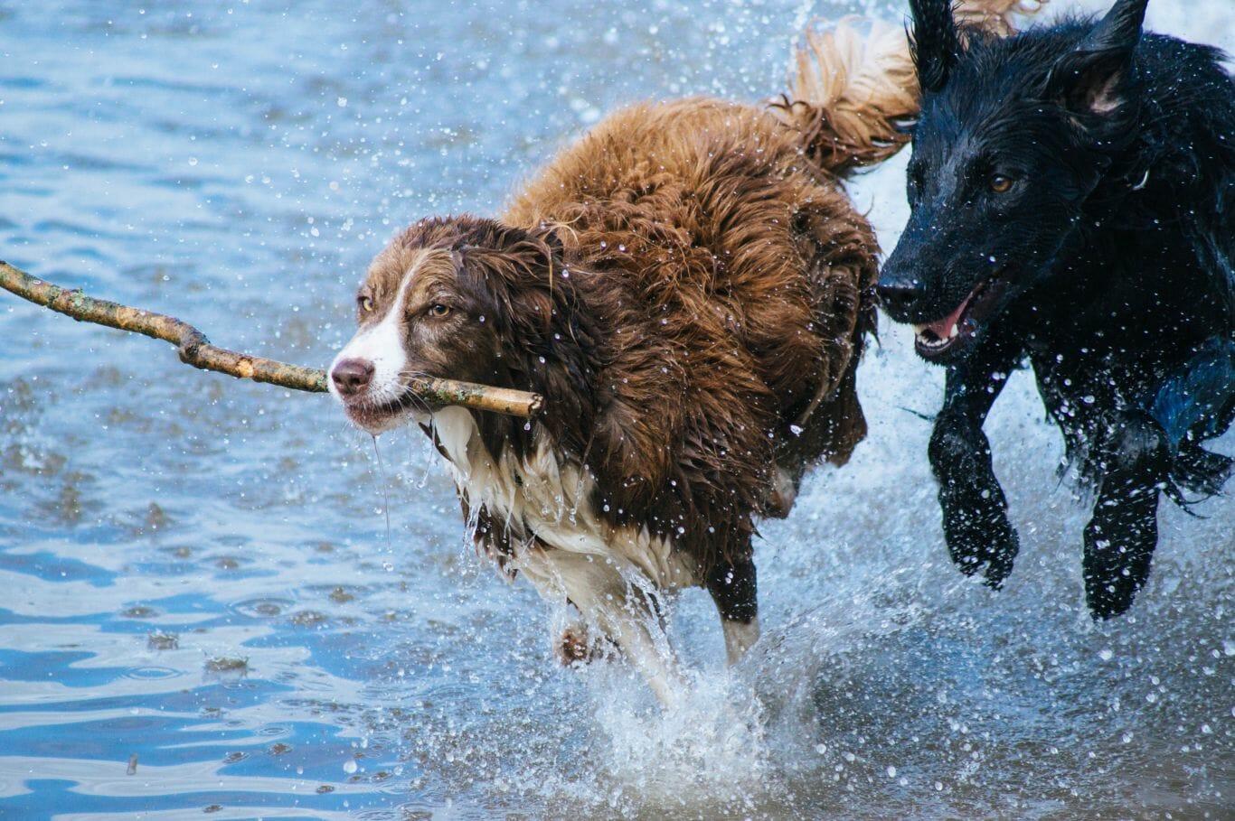 cachorro amigo veterinário 3