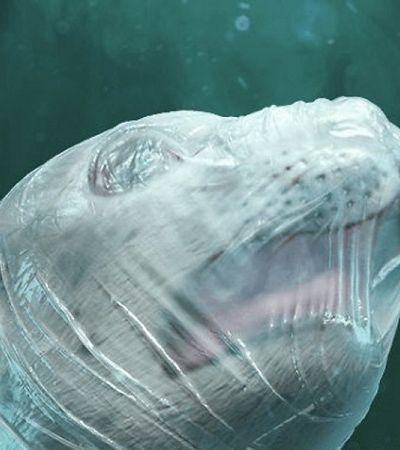 Sea Shepherd mostra animais sufocando com plástico para conscientizar sobre oceanos