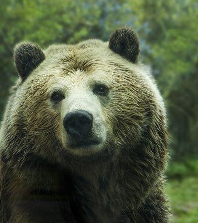 Concurso de caça paga 500 dólares por animal morto e revolta internautas
