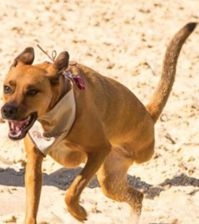 Ataque virtual à cachorra com deficiência mostra por que precisamos falar sobre eles | Adotar é Hype #4