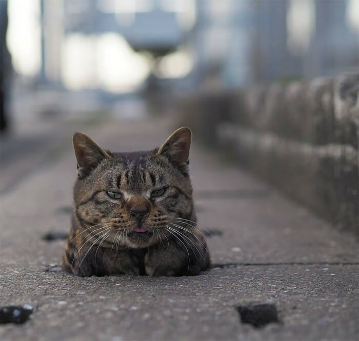 gatos de rua 1