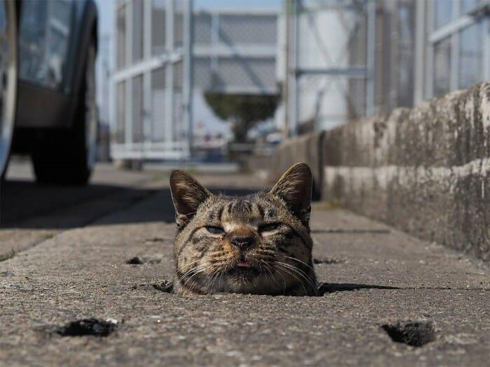 gatos de rua 11