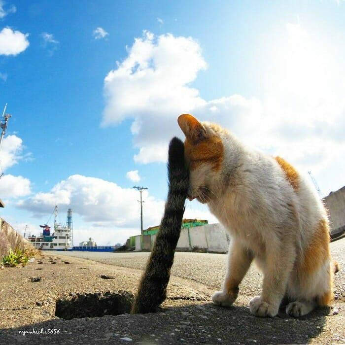 gatos de rua 12