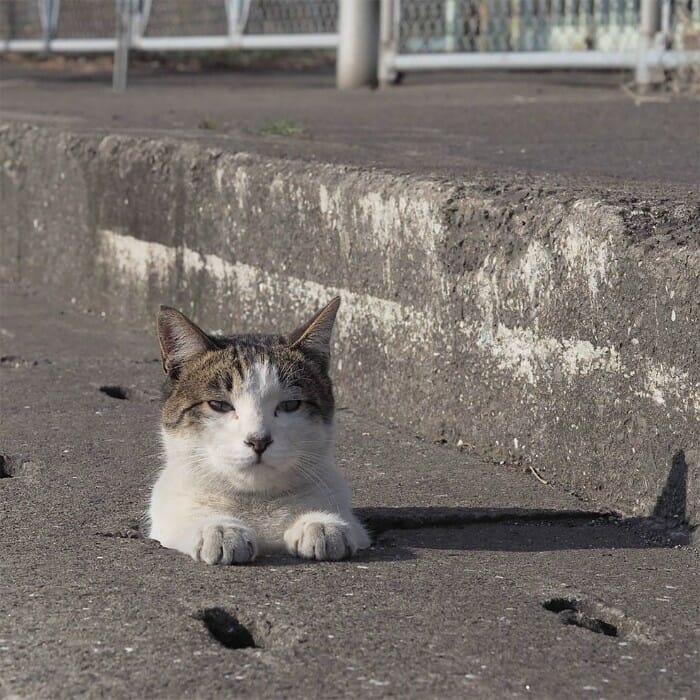 gatos de rua 13