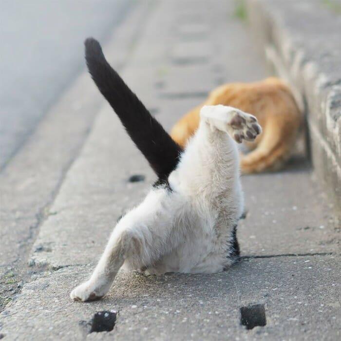 gatos de rua 14