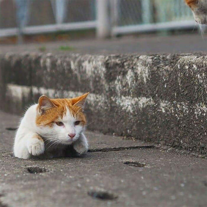 gatos de rua 15