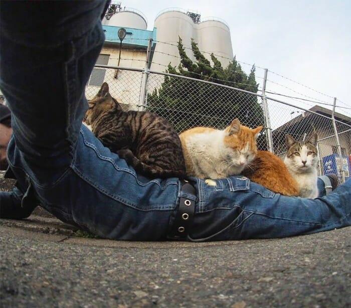 gatos de rua 16