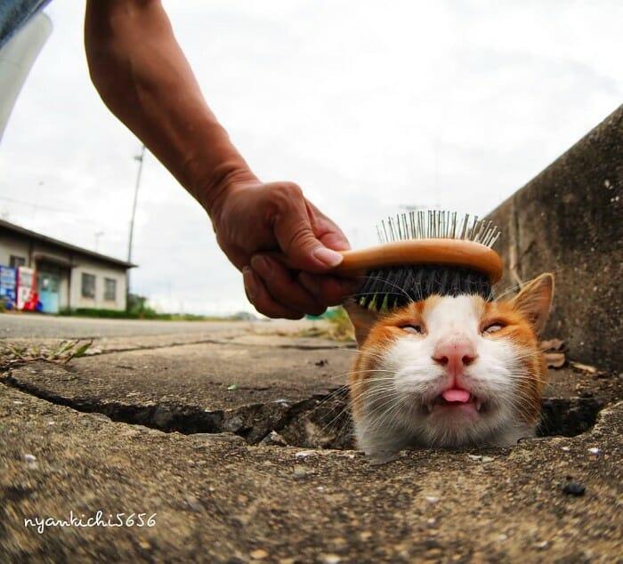 gatos de rua 17