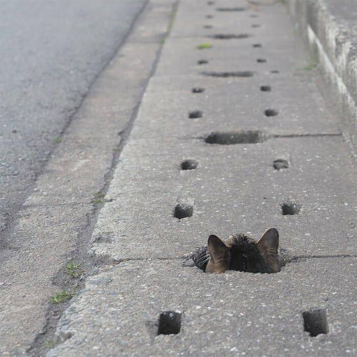gatos de rua 18
