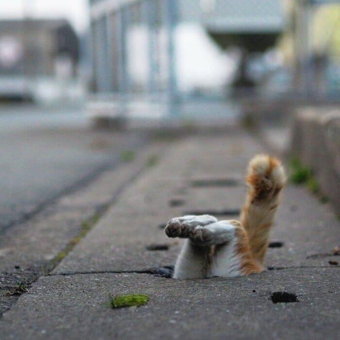 gatos de rua 19
