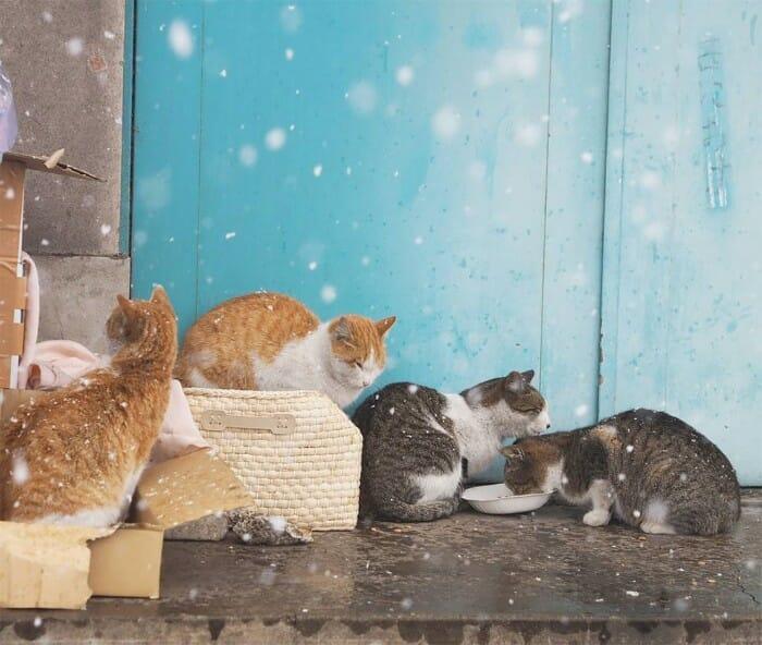 gatos de rua 20