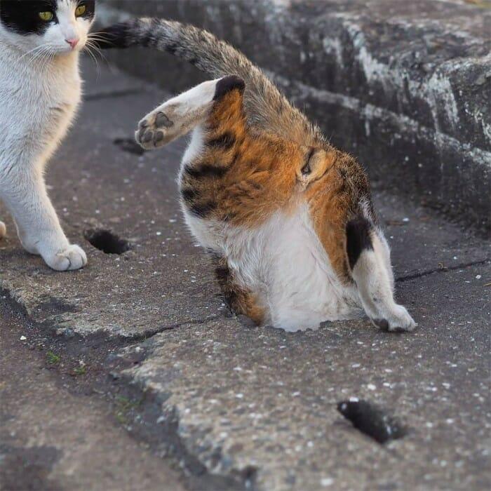 gatos de rua 21