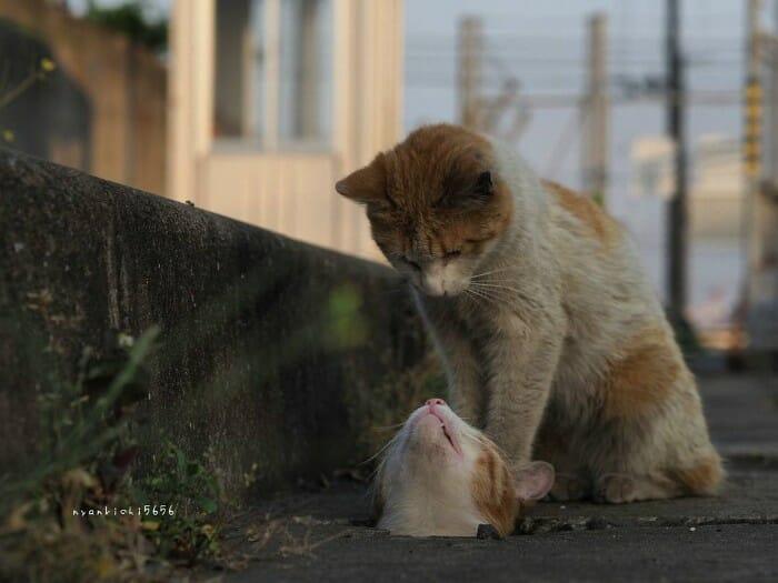 gatos de rua 22