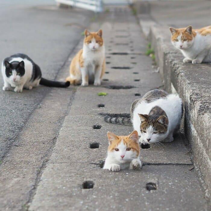 gatos de rua 23