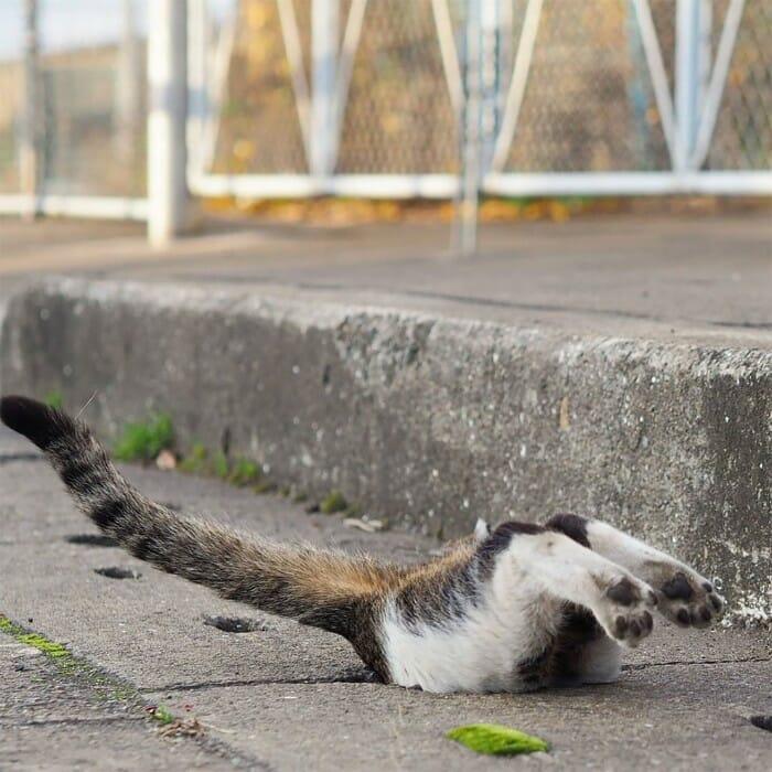 gatos de rua 4