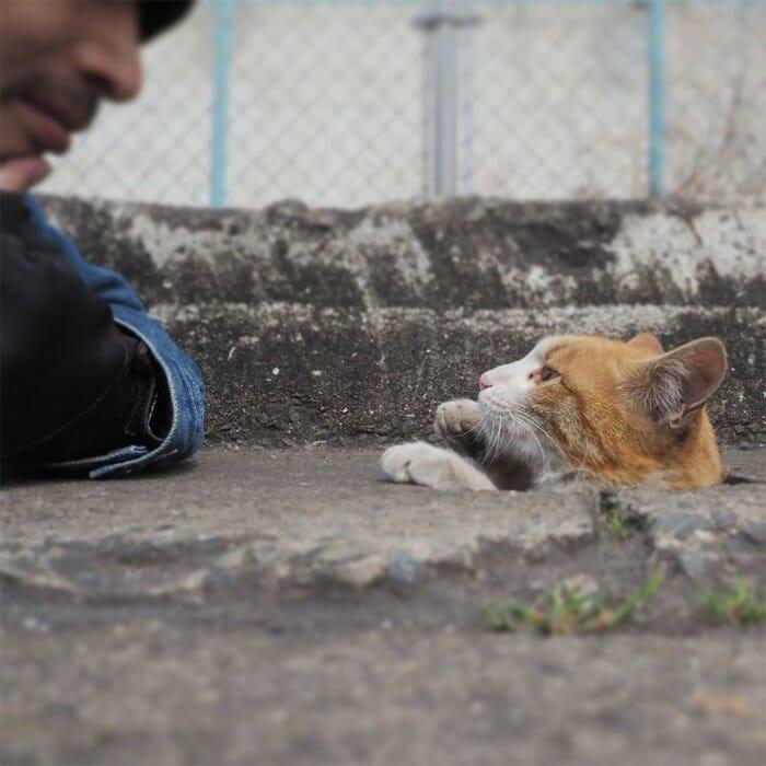 gatos de rua 7