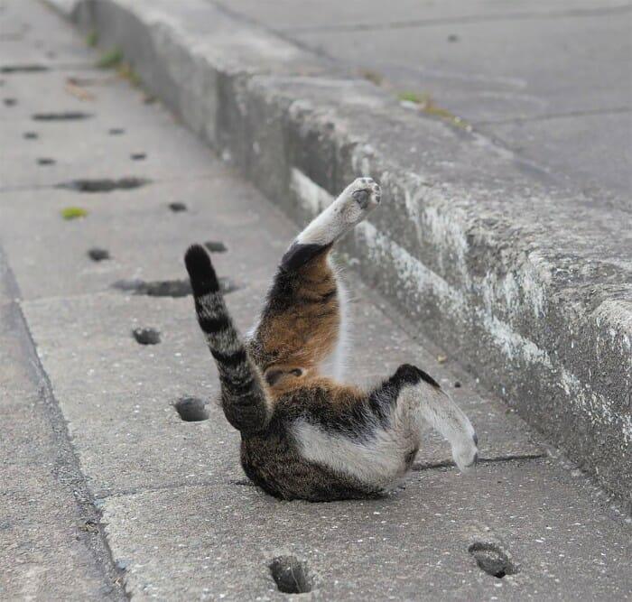 gatos de rua 9