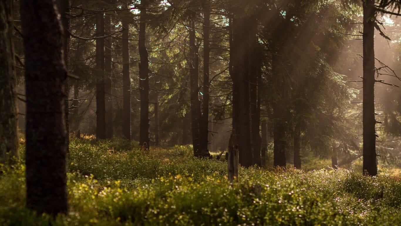 guardiãs da floresta 1