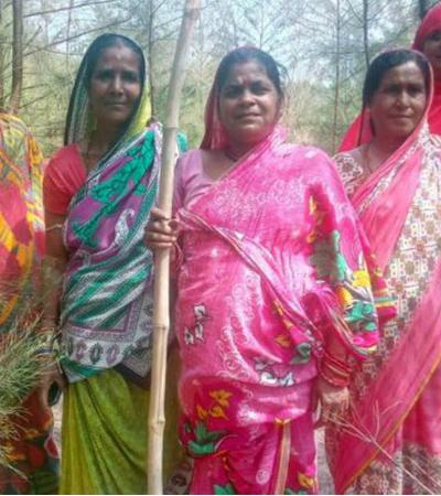 Esta floresta é vigiada e protegida por um grupo de mulheres há 20 anos