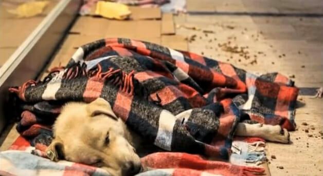 Filhote de cachorro enrolado em um cobertor
