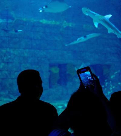 Vereador propõe proibição de novos aquários e zoológicos em São Paulo