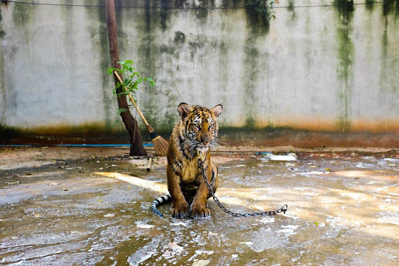 proibição zoologico 2