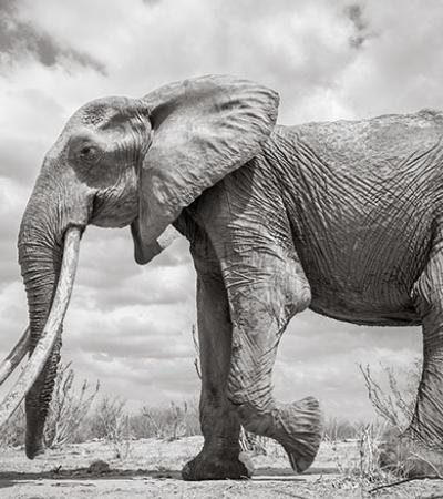 As últimas fotos da lendária 'rainha elefanta' antes de sua morte