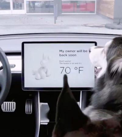 Pet friendly: Tesla lança 'modo cão' em seus carros