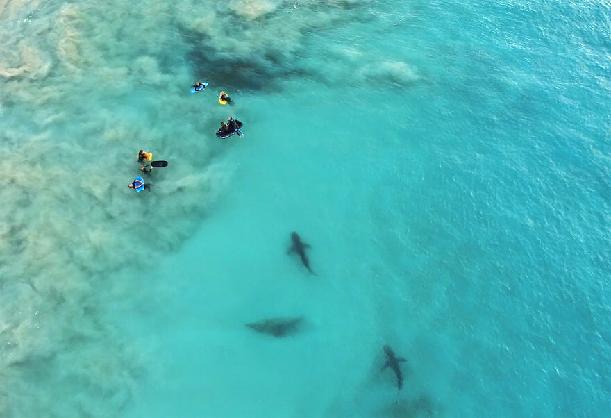 tubarões surf austrália 10