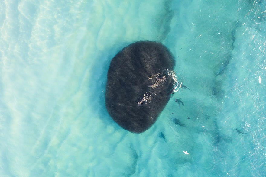 tubarões surf austrália 3
