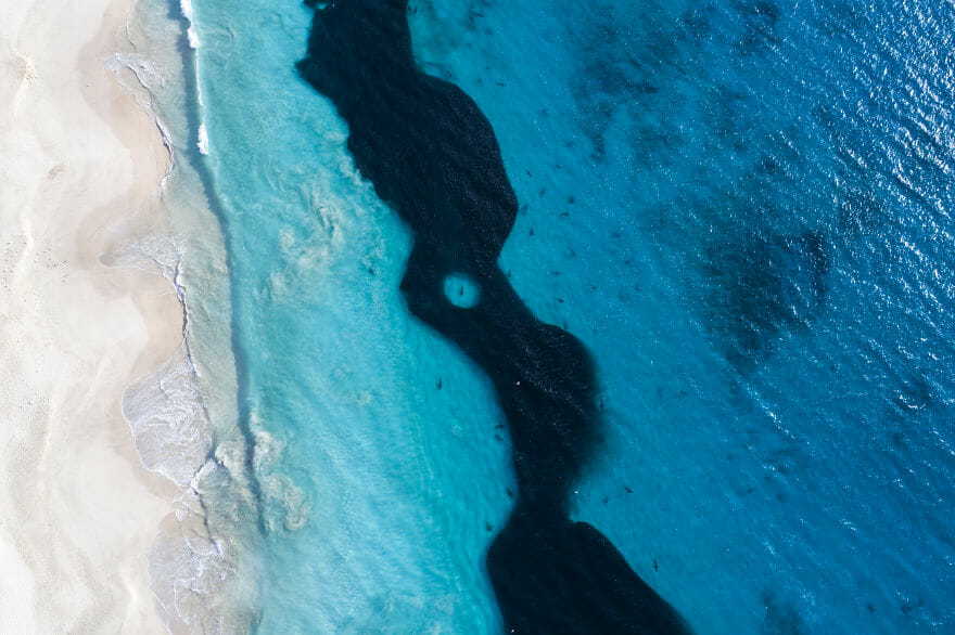 tubarões surf austrália 4