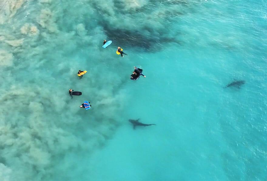 tubarões surf austrália 5